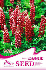 1 Pack 15 Lupine Seeds Lupiuns Polyphyllus Lindl Red Lupine Garden Flowers A240