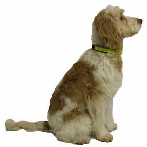 "Dog Walking Hi-Visibility Yellow Dog Collar 16 - 25"" / 40-63cm (Large)"