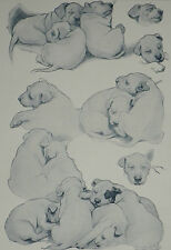 Sleeping Beauties Christopher C Ambler Sleeping Puppy Dog 1930 Print 8338