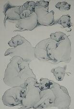 Sleeping Beauties Christopher C Ambler Sleeping Puppy Dog 1930 Print 8338