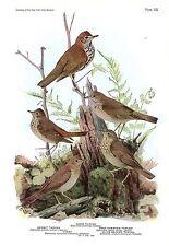"1936 Vintage FUERTES BIRDS #105 ""WOOD THRUSH, HERMIT"" Color Plate Lithograph"