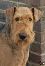 Airedale Terrier A6 Blank Card Design No 5 By Starprint - Auto combined postage