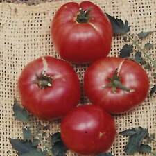 Tomato - German Johnson - 250 Mg Packet ~90 Seeds - Heirloom, Vegetable Garden