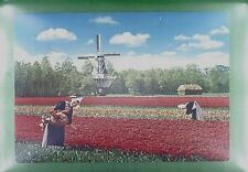 CPA Holland Molenland Windmill Moulin Windmühle Flowers Costume Folklore w296