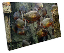 PIRANHA FISH CANVAS WALL ART PICTURE LARGE 75 X 50 CM READY TO HANG