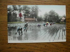 Planting Rice sprouts in Japan  (I think !! )