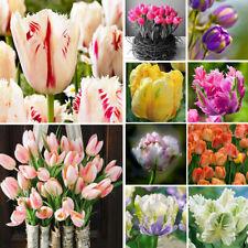 IG_ 100Pcs Rare Rainbow Tulip Flower Bulbs Seeds Perennials Plant Decoration Bum