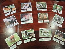 Montessori Homeschool ANIMAL BABIES Science Naming Card Matching Material