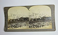 Keystone Stereoview Card Pigeon Farm Los Angeles California Antique Vintage