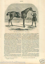 Race Horse Eclipse England Cheval course Angleterre UK GRAVURE OLD PRINT 1862