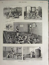 1883 VICTORIAN PRINT ~ FOXHOUNDS AT HOME ~ FEEDING EXERCISE