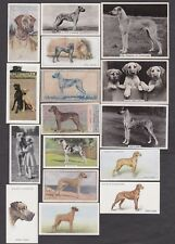 21 Different Vintage Great Dane Tobacco/Candy Dog Cards Lot