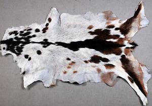 GOAT Western taxidermy Hide Rug Natural Pattern Fur Goat Hide Rode SA-7574