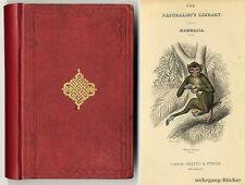 Jardine: Mammalia. Monkeys, mit insges. 30 kolorierten Stahlstichen um 1850