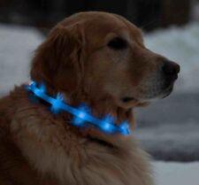 Colliers lumineux bleus pour chien