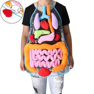 1 PCS Anatomy Apron Human Body Organs Awareness Educational Insights Children