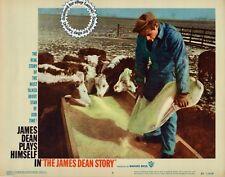 James Dean feeding cattle on ranch Lobby Card #6 THE JAMES DEAN STORY 1957 bioA+