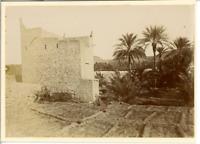 Algérie, L'Oasis de Gherdaia Vintage citrate print.  Tirage citrate