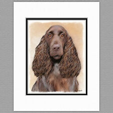 Field Spaniel Dog Original Art Print 8x10 Matted to 11x14