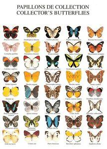 Postcard, Papillons Collector's Butterflies by Nouvelles Images S.A 1999 OK1