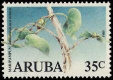 """ARUBA 43 - Maripampun Flower """"Omphalophalmum rubrum"""" (pb18707)"""