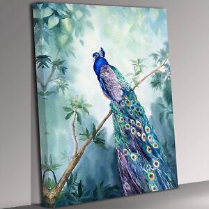 Peacock Bird  Portrait Canvas Wall Art Picture Print