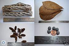 Cholla Wood,Dwarf Shrimp,Mineral Balls,Almond Leaves,Alder Cones,Shrimp Food