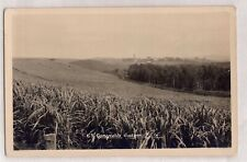 VINTAGE POSTCARD RPPC CANEFIELDS CUDGEN NSW 1900s