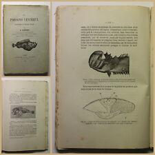 Bottard Les Poissons Venimeux 1889 Ichthyologie Fische Fischkunde Zoologie