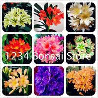 30 Pcs Seeds Mini Bonsai Clivia Flowers China Potted Outdoor Balcony Garden NEW