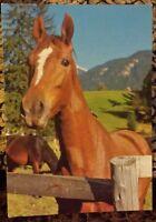 Pferdepostkarte, AK Pferde, Pferdepostkarten, Jugendherbergs-Verlag