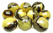 TUMBLED (DISCOUNT : IMPERFECT) - (1) Large SEPTARIAN Crystal with Card - Healing