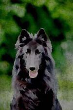 Renaissance Dogs: Belgian Sheepdog : Belgian Groenendael:...