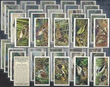 PLAYERS-FULL SET- BIRDS AND THEIR YOUNG (ADHESIVE 50 CARDS) - EXC
