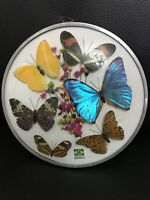 Vintage Brazilian Wall Art Butterflies Flowers Brazilia Collection Made Brazil