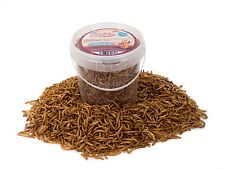 1 Litre High Quality Chubby Dried Mealworms in a Tub Mealworm for Wild Birds etc