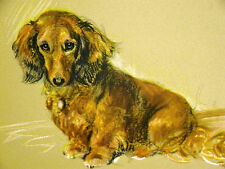 Lucy Dawson Stunning RED LONG HAIRED DACHSHUND 1946 Vintage Dog Print Matted