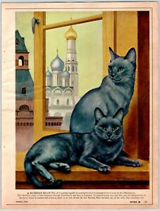 """RUSSIAN BLUE CAT 8.25"""" X 11"""" Magazine Photo Page Clipping 1960's M134"""