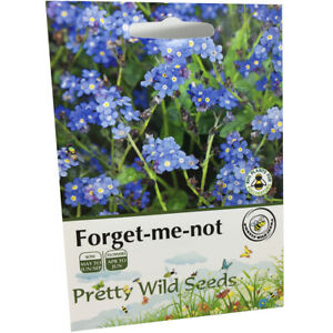 Forget-Me-Not seeds Myosatis arvensis Wild Flower 1,000 seeds Pictorial packets