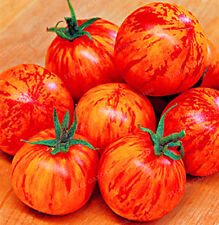 Sweet & tangy Tigerella tomato. 80+ fresh organic seeds for 2017