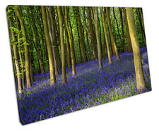 BLUEBELL FOREST CANVAS WALL ART PICTURE LARGE 75 X 50 CM