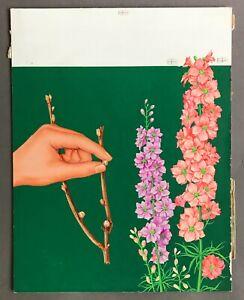 Original Painted Cover Illustration for Understanding Gardening  Feb. 22, 1964