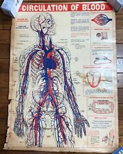 Vintage C1946 Medical Circulation Of Blood Poster