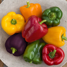 20+ Bell Pepper Mix Seeds | Non-Gmo | Fresh Vegetable Garden Seeds Us Seller