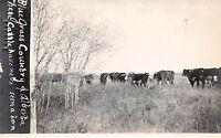 CANADA Postcard Real Photo RPPC c1914 C.P.R. Railroad Trip Alberta Cows Grass151