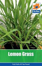 2 PACKS of LEMON GRASS Garden HERB SEEDS
