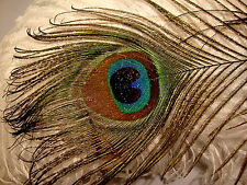 """10 Natural Stardust Glitter Eye Stems Peacock Feathers 12-14"""" - US Seller"""