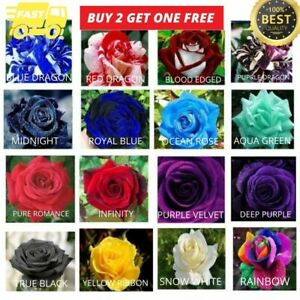 10 x Rose Seeds Multi Coloured Rose Flower Garden Garden UK Seller 16 VARIETIES