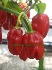 VEGETABLE  HOT CHILLI PEPPER HABANERO RED  110 SEEDS   VERY HOT