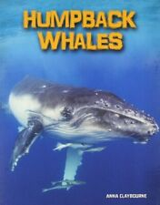 Humpback Whales Living in the Wild Sea Mammals